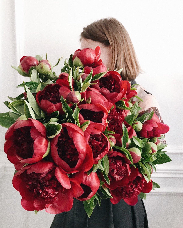 Цветы пионы бордовые фото