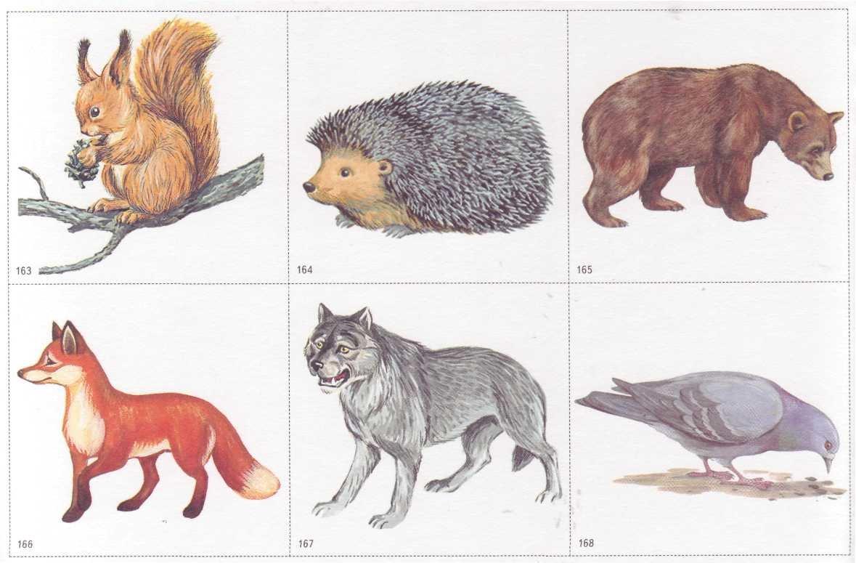 Картинки детенышей диких животных для детей по одному