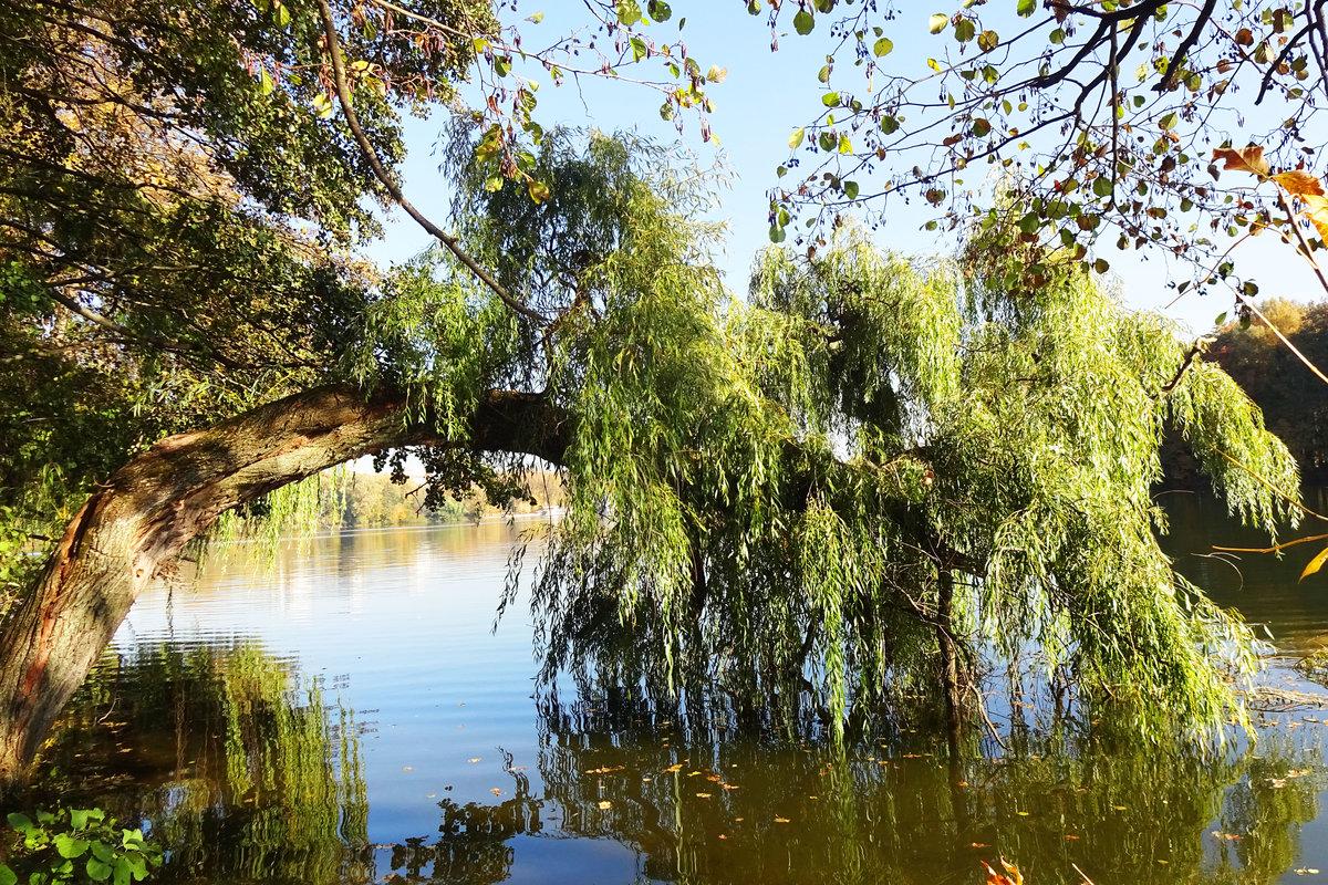 данным ива у озера картинки шторы
