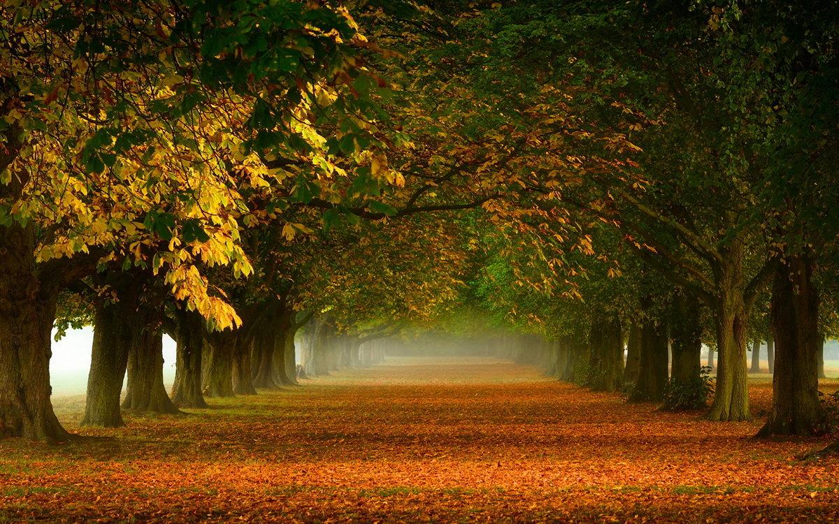 Широкая лесная аллея осенью