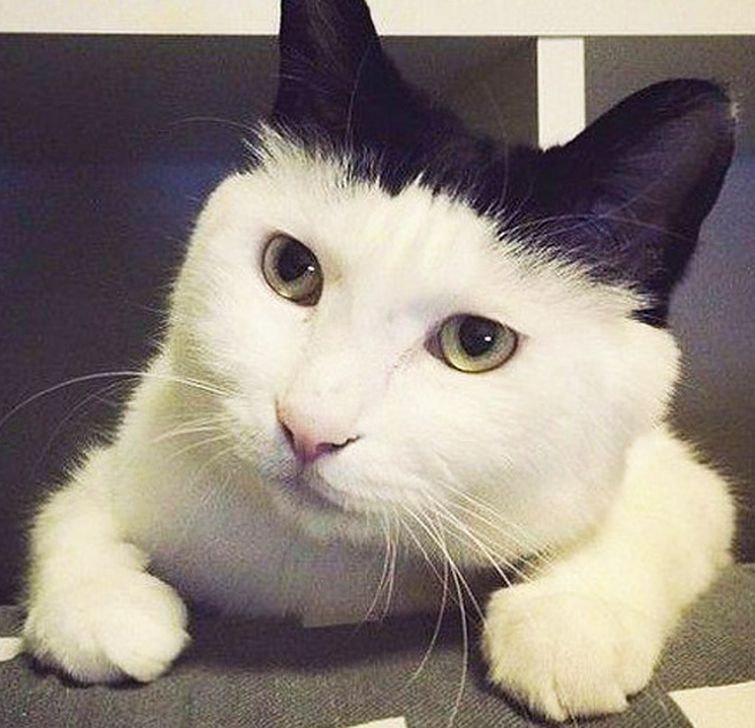 Малиновке гифы, смешные котики без надписей