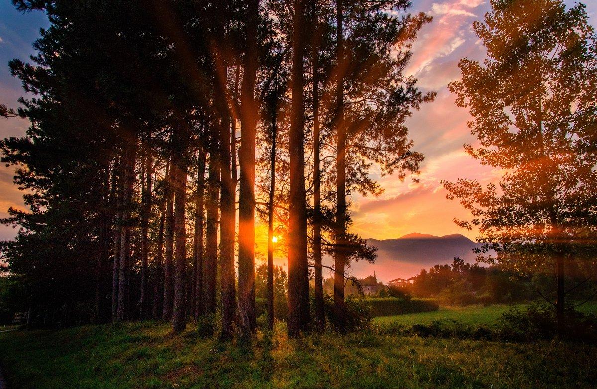картинки с вечерним лесом вам