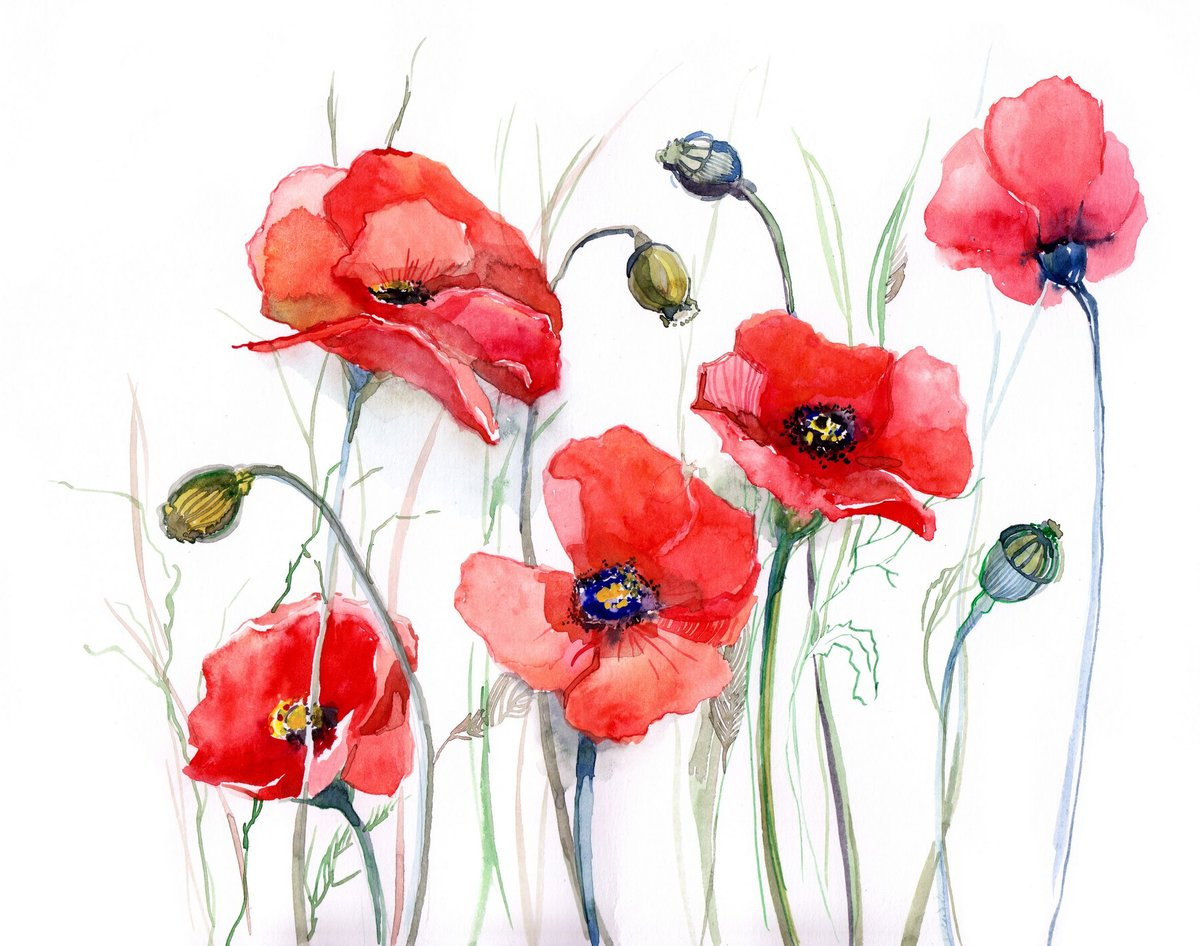 Прикольные, цветы маки картинки нарисованные