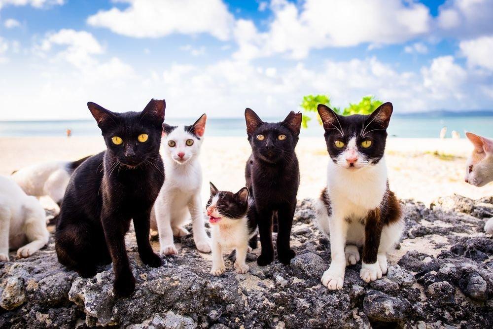 кстати, картинки семейства кошачьих котят можно