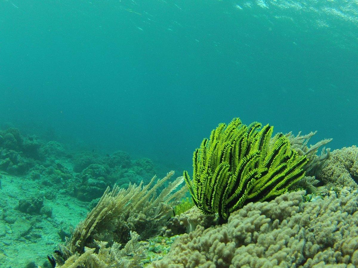 посткоитальная морские водоросли фото яйца