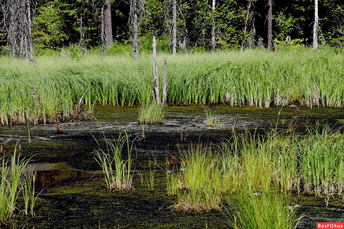 прооперировали августе фото лесное болото участки