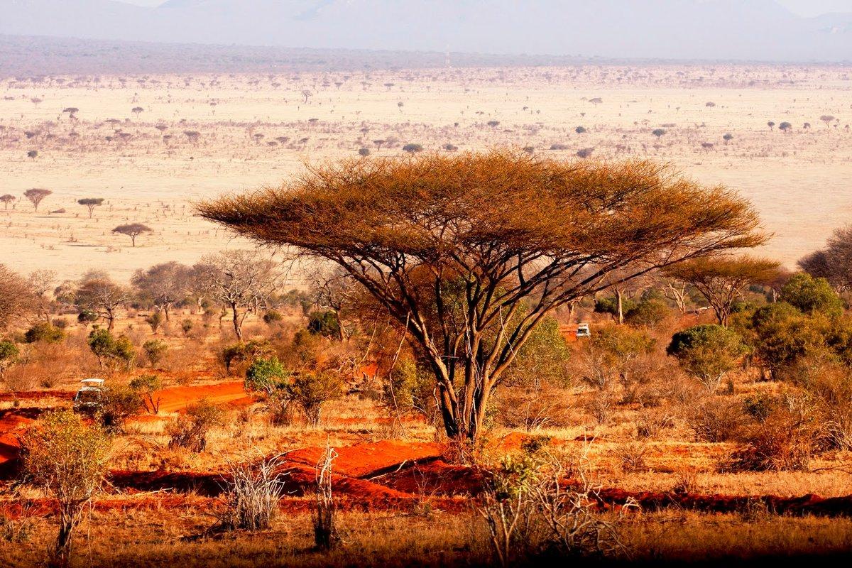 Африканские пейзажи картинки