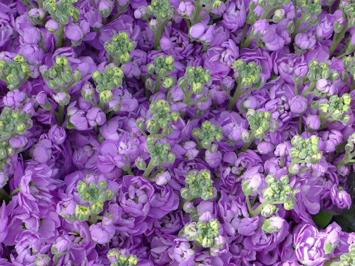 Картинка с пчелами и цветами смешные прихожую старинное