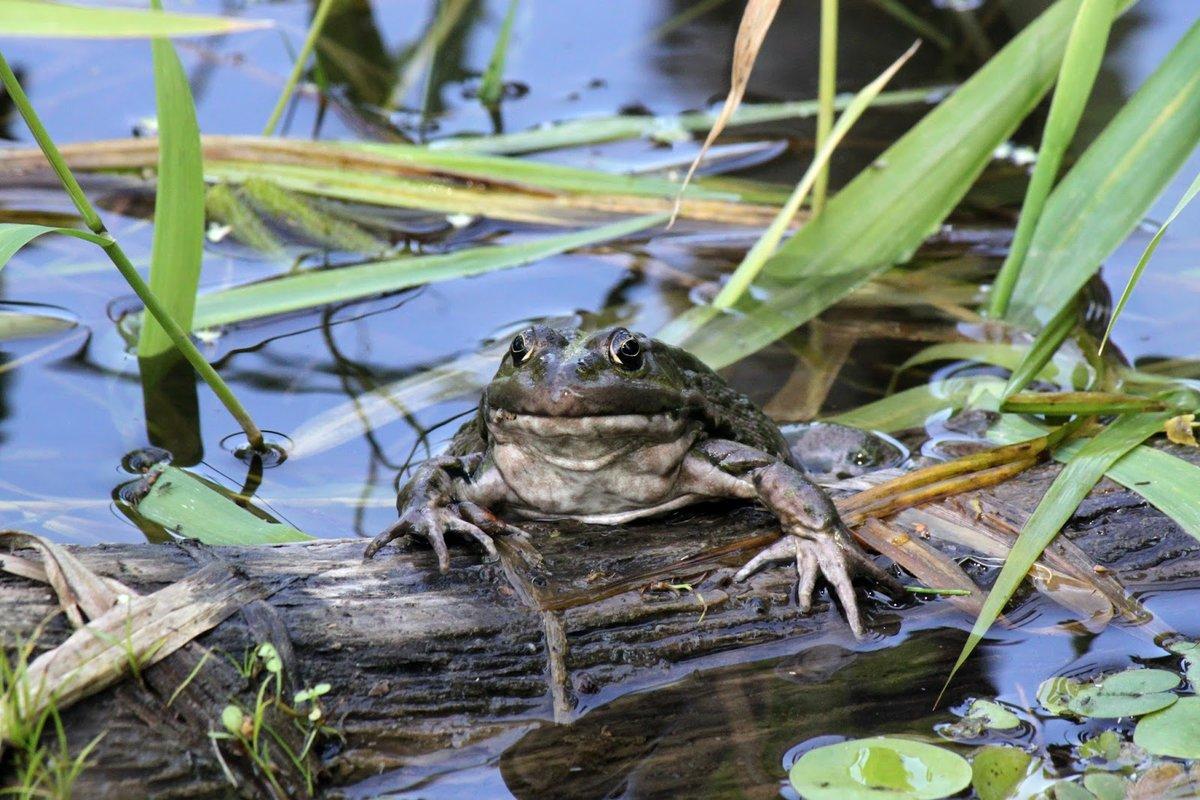 Картинки в луже посредине рощи есть у жабы своя жилплощадь