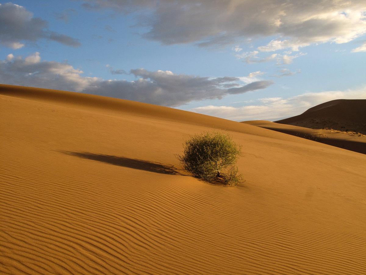 поиск пустыня картинки