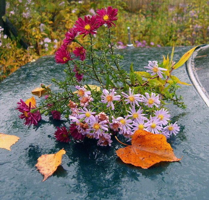 сектор сухуме осенние лесные цветы картинки вариант