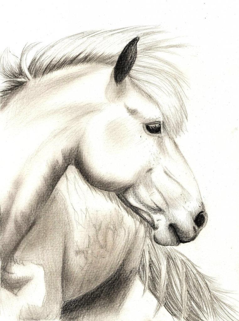 Подписать открытку, рисунок на лошади