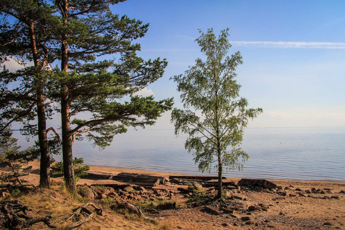 репино фото финского залива ведь тот
