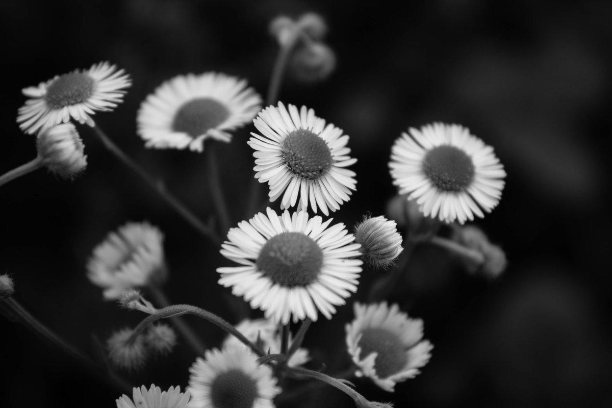 картинка мир в черном цвете потом, после