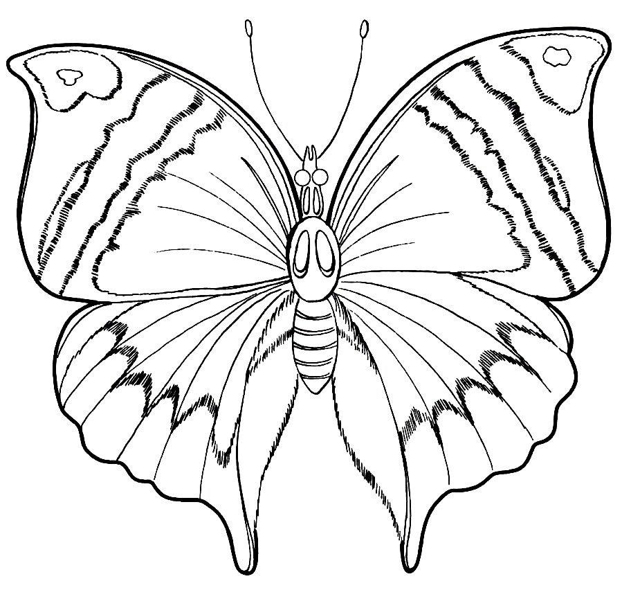 Бабочки рисунки карандашом картинки, невесте картинка