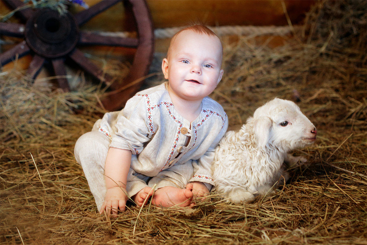 Картинки с овечками и козочками