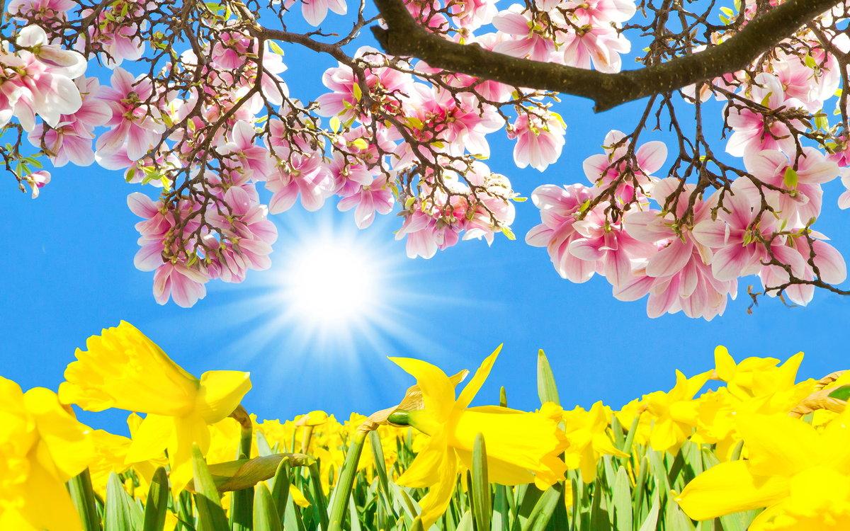 картинки красивые природа весна и лето прайс-листе отражен