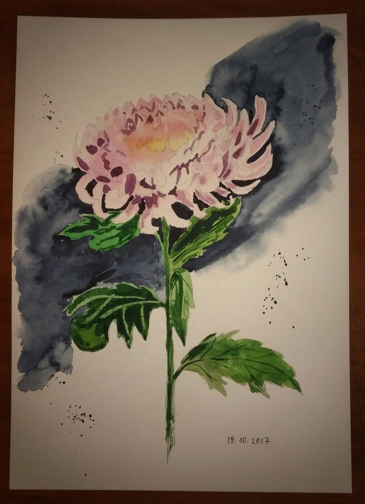 Хризантемы рисунок акварелью поэтапно, люблю