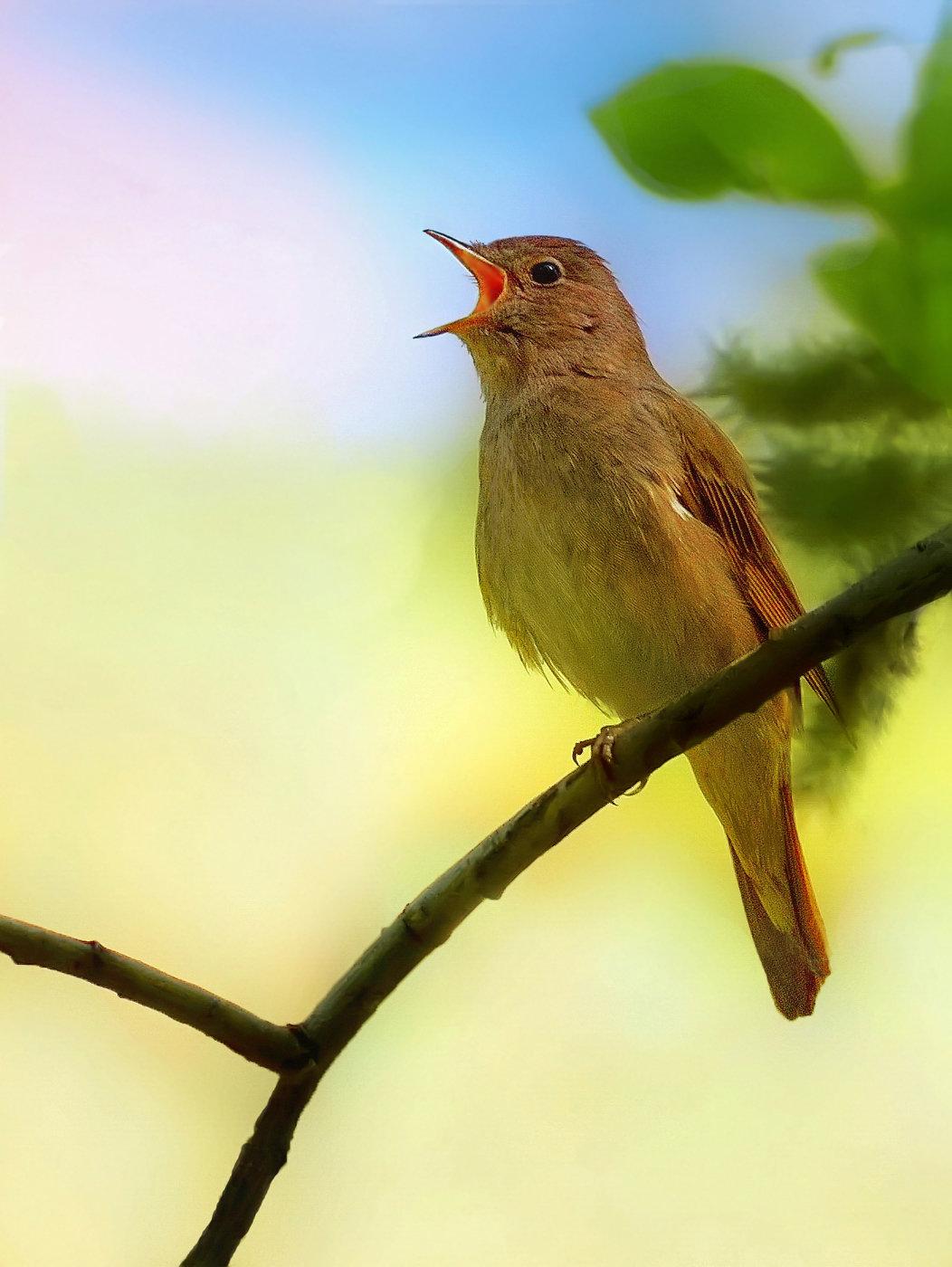 звуки российских птиц позировала штурвала