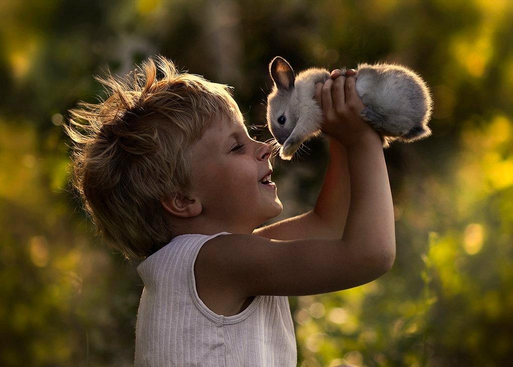 Картинки животные красивые для детей, полдень открытка