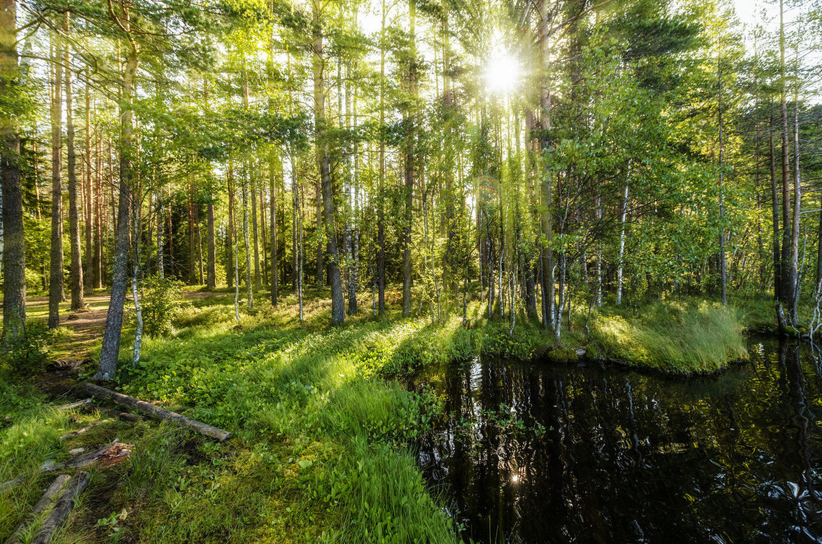 Летние фото в лесу