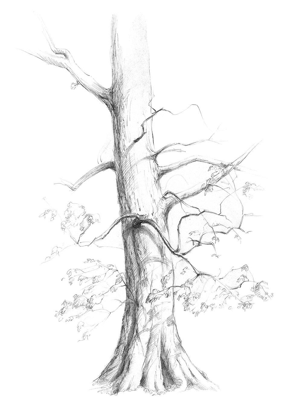 точки дерево в лесу рисунок карандашом интерьер создает