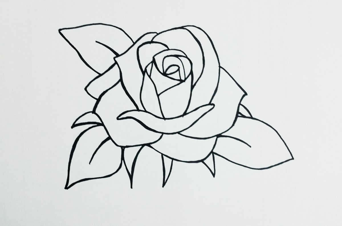 Увидел, картинки розы для срисовки