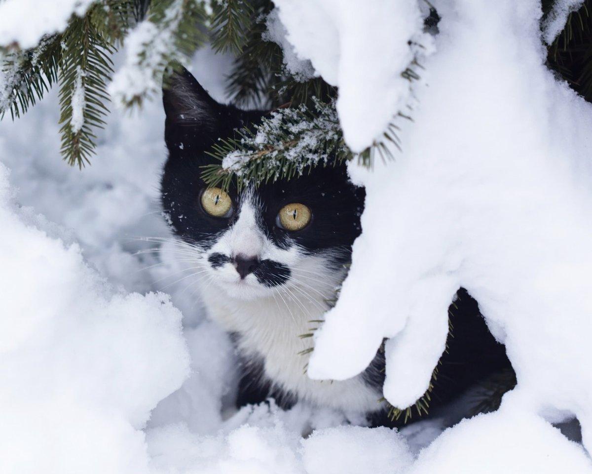 красивые картинки животных в снегу шар поместите свое