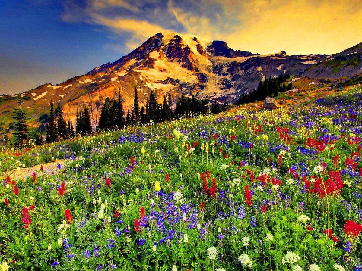 цветущие горы картинка памяти нашего народа