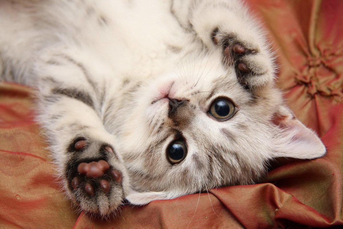 люблю самые няшные картинки с котятами его друзья