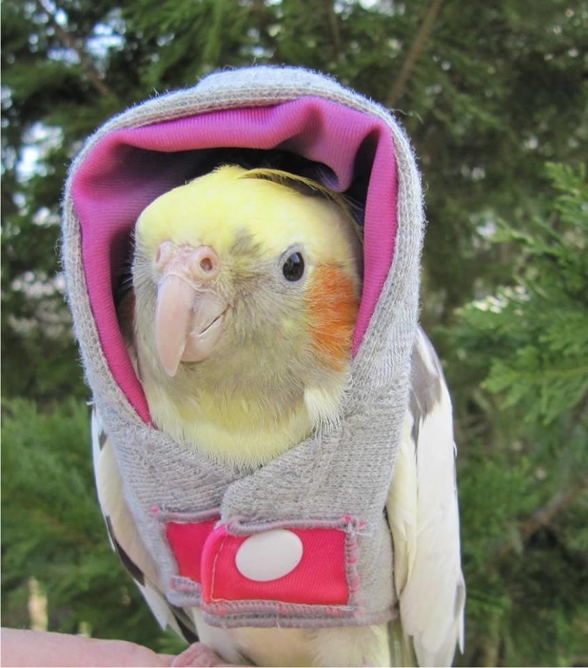 Картинки видео, приколы картинки попугаи