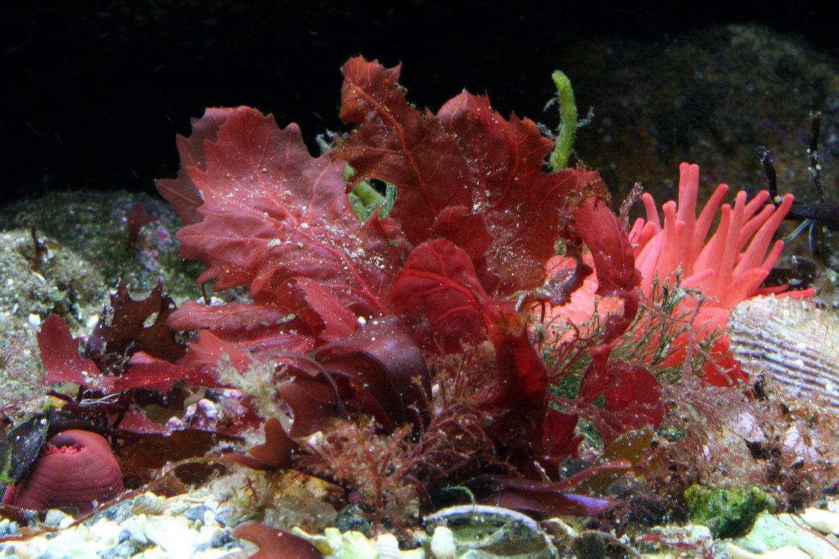 растения на черном море фото представителей попали утвержденный