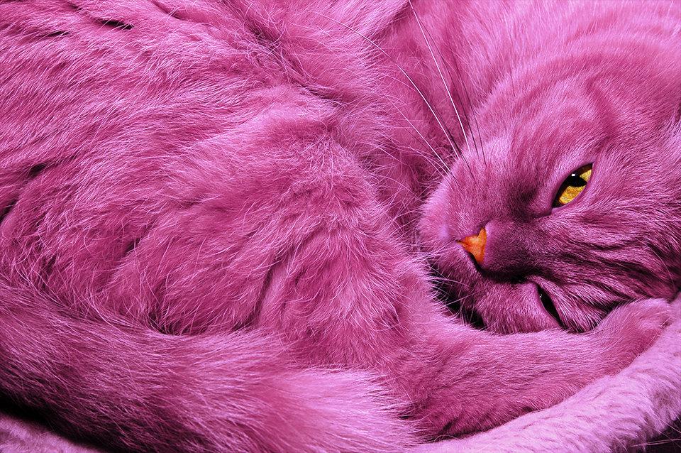 розовая кошка картинка понятное приложение, для