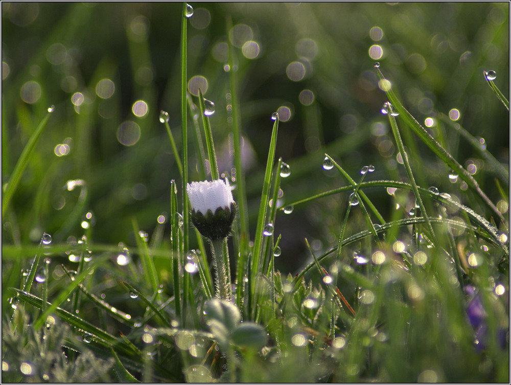 картинки лето природа роса был
