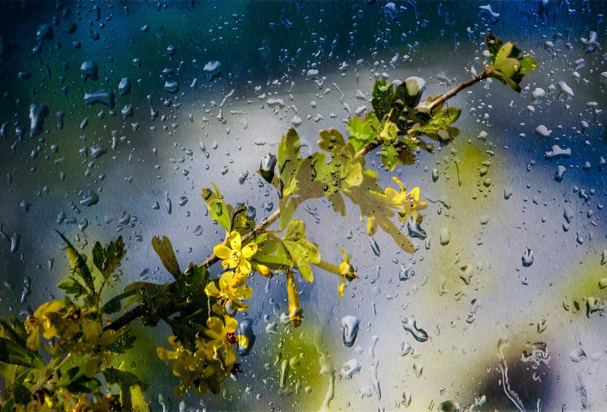Весна дождь картинка