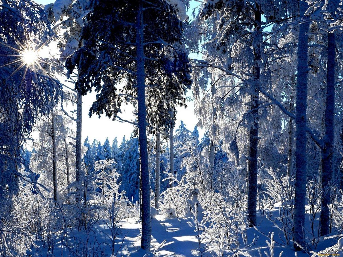 Картинки на тему в зимнем лесу