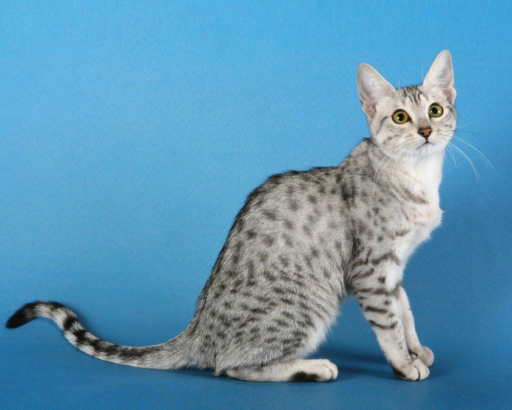 Картинка кошек с названиями заведении можно