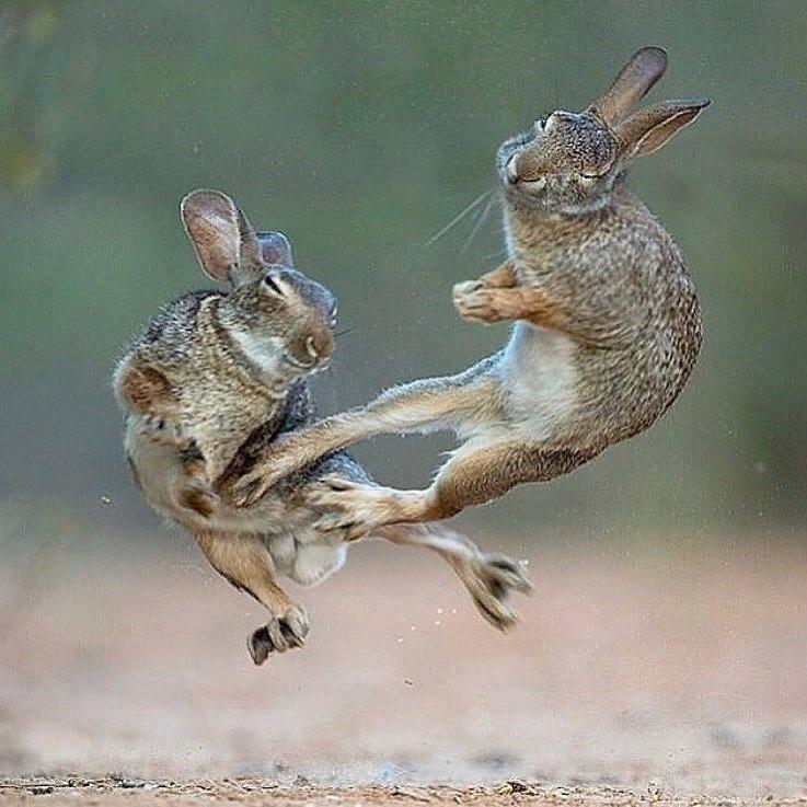 Анимация создать, приколы в картинках с зайцами