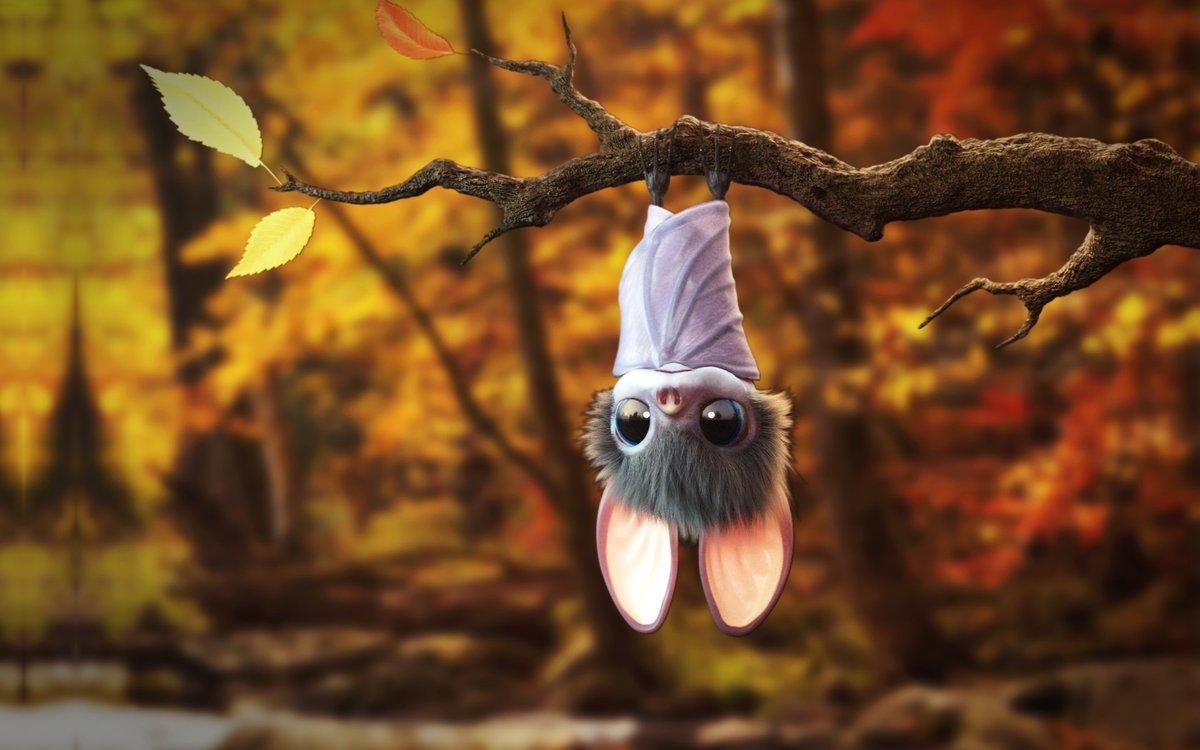 Картинки смешных летучих мышей