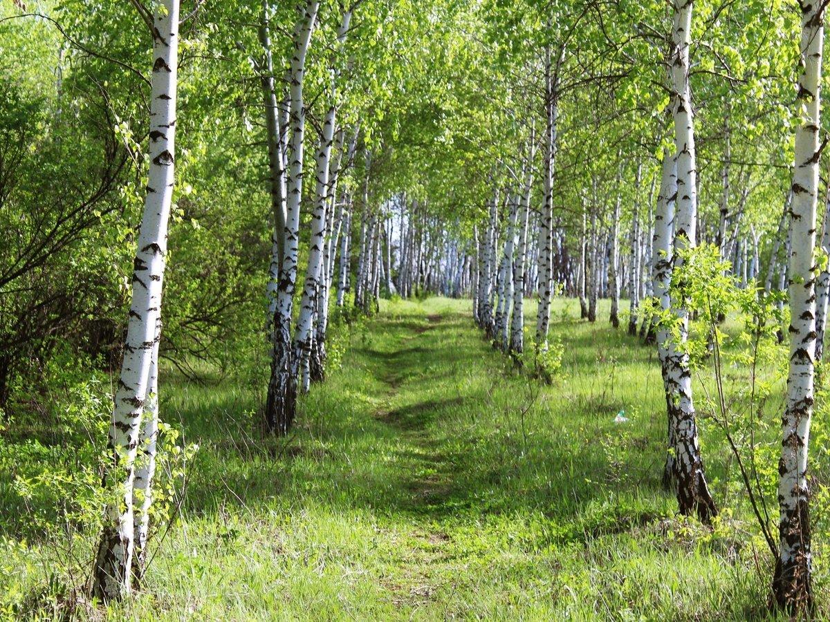 Картинки природа россии лето