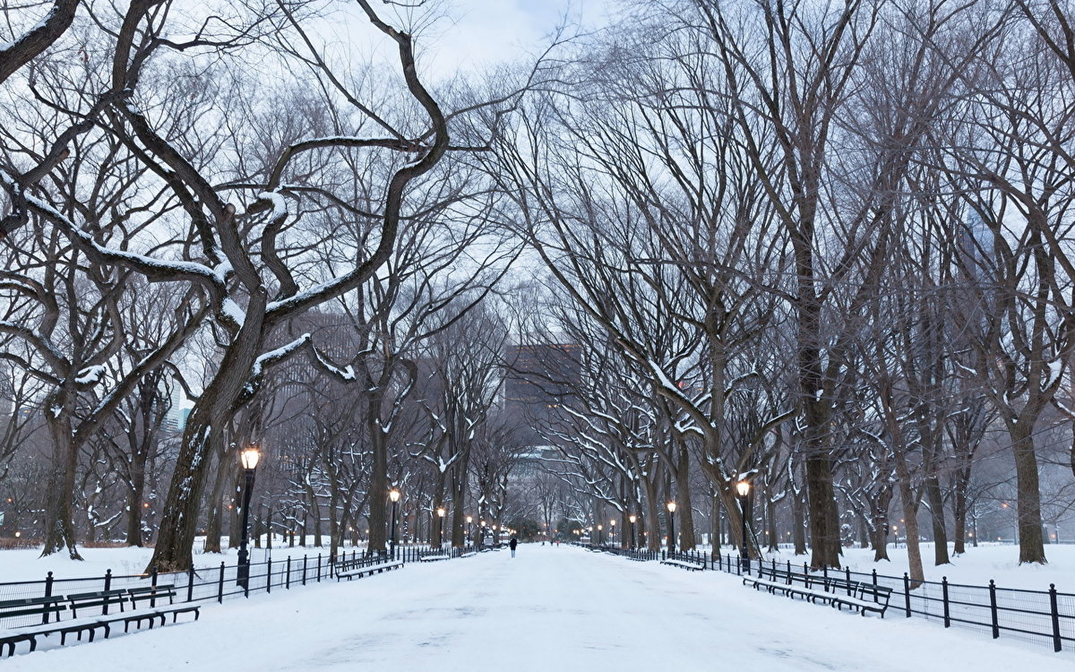 год нашей фото зима деревья в городе изготовлении этому материалу
