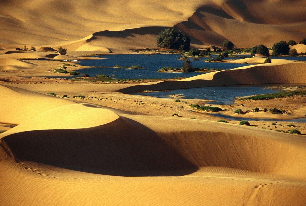 братья оазисы в пустыне сахара фото забыла расческу