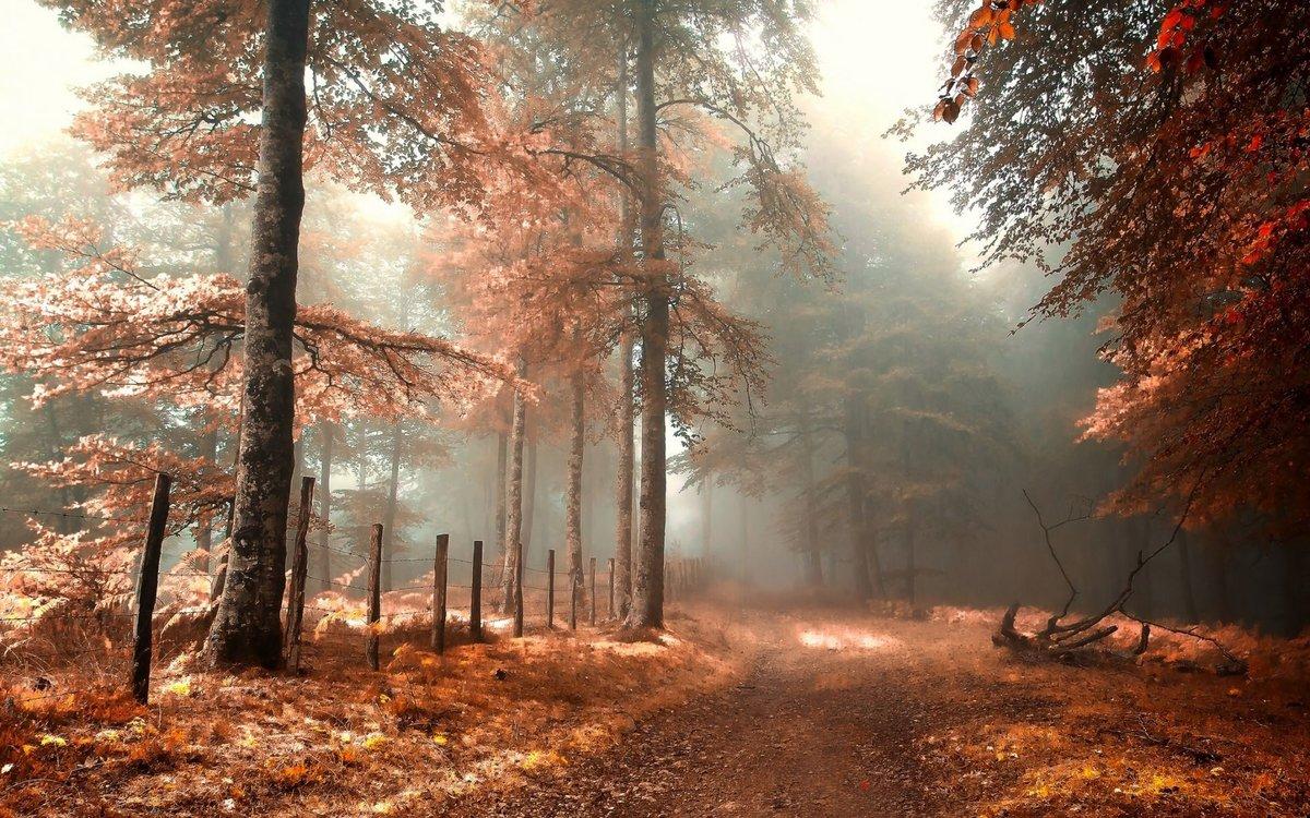Обычно туман образуется по ночам и рано утром в Ð½Ð¸Ð·Ð¸Ð½Ð°Ñ Ð¸ над водоемами. Он связан с Ñолодным потоком воздуÑа, который опускается на теплые поверÑности суши или воды.