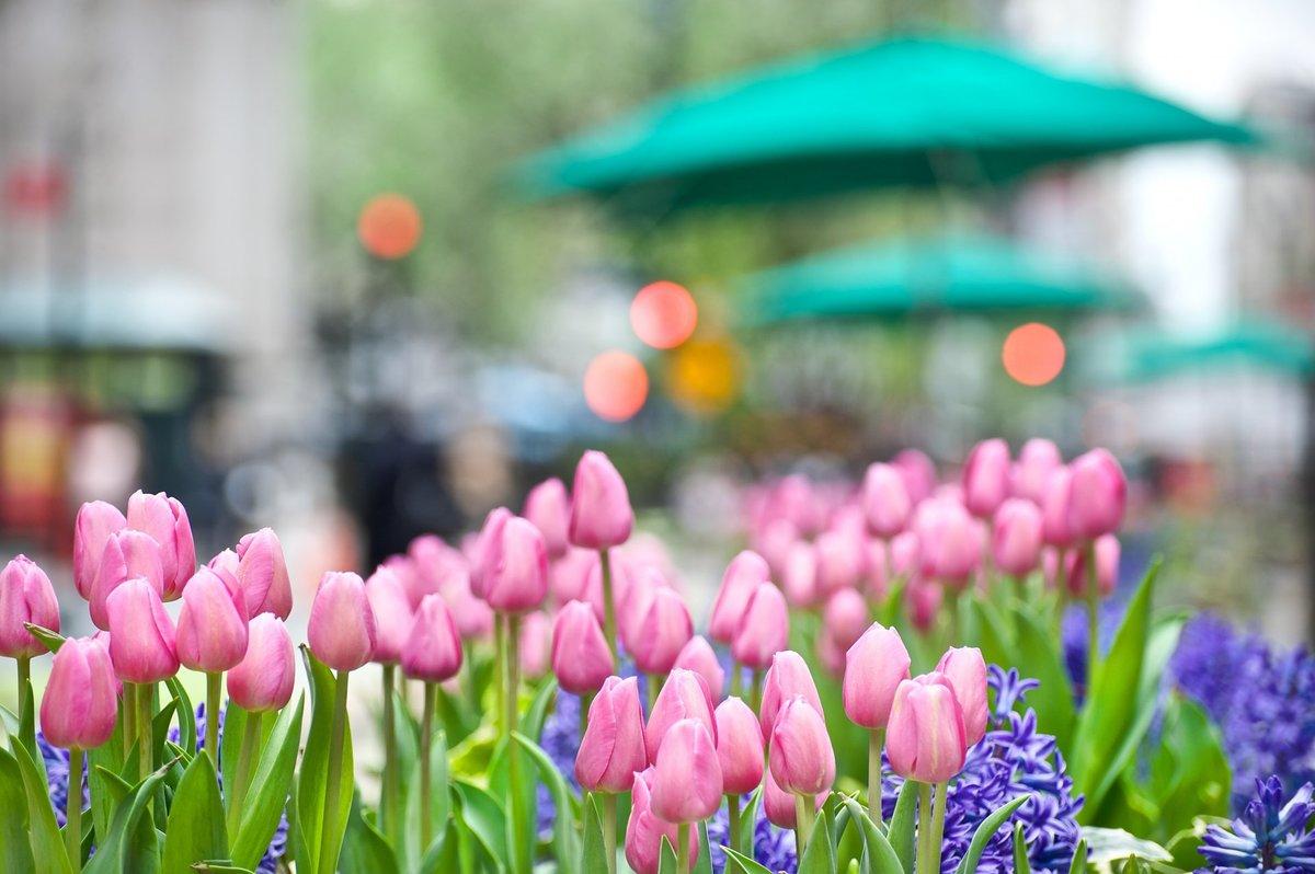 Самые красивые картинки весны, добрым утром прикольные