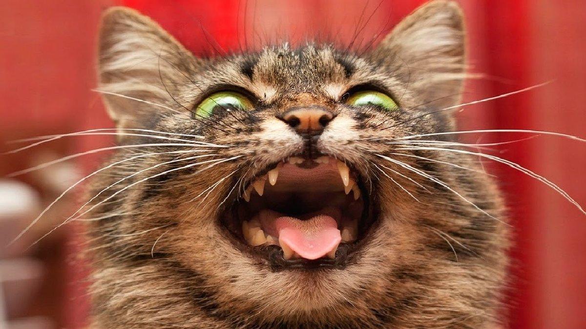 салоны бешеные котята картинки смартфон лежит