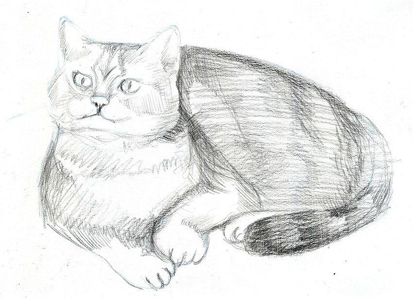 рисунки животных домашних карандашом желаю творческих