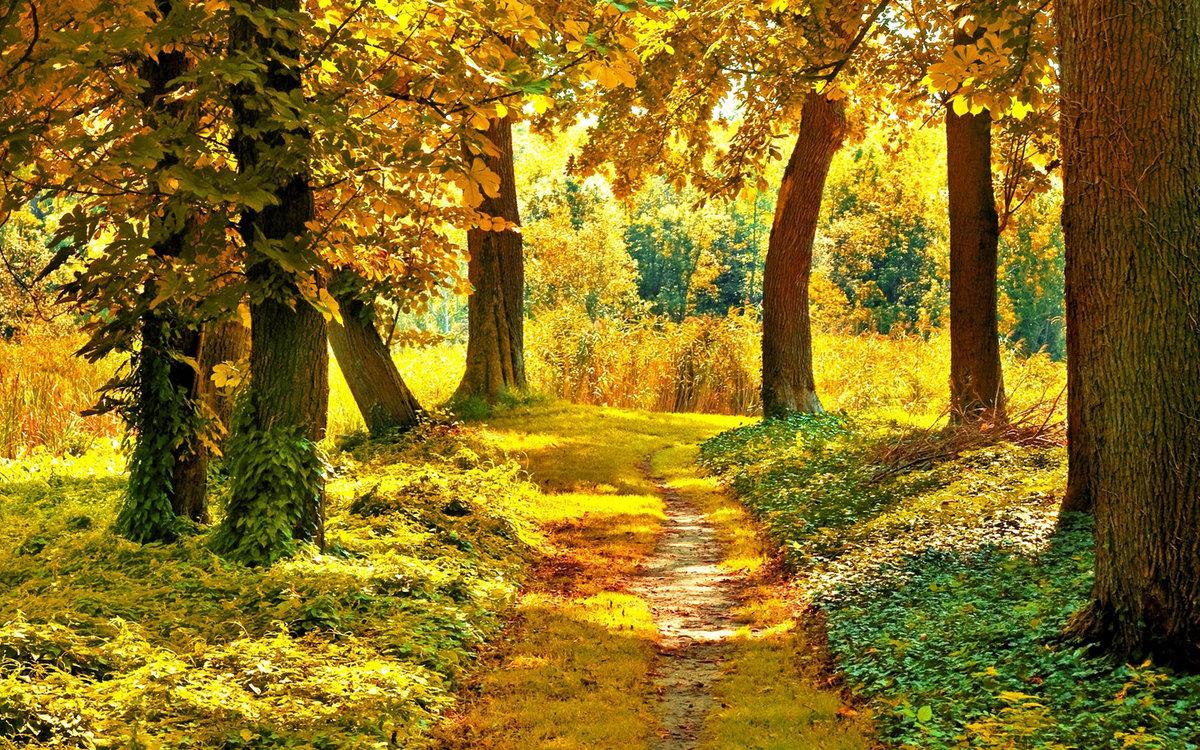 Осень в лесу открытки
