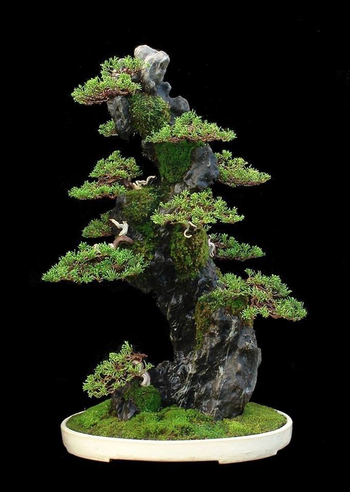 Японские растения, покорившие мир своей необычной красотой, вот уже во второй раз представлены гостям Ботанического сада МГУ