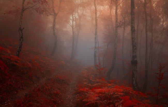 Живописный туман в лесу.