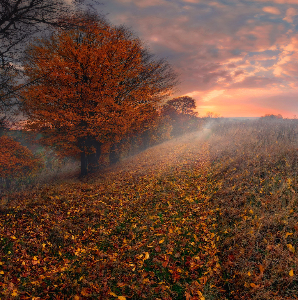 Розовый рассвет осеннего утра